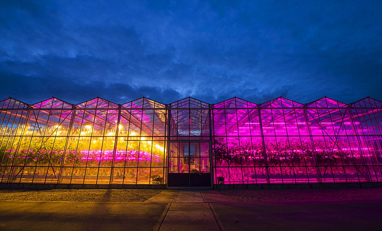 greenhouses wavelengths of light