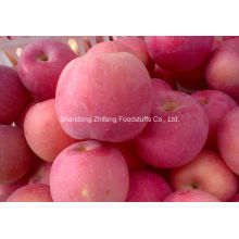Red FUJI Apple for Exporting