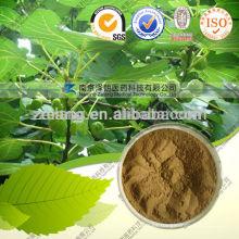 Extracto de hoja de olivo 20 Precio de oleuropeína 25%