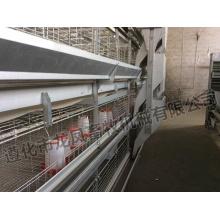 Cage de Capa Automática para Equipamentos de Avicultura