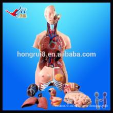 ISO 85CM Modelo Unisex (40 partes), modelo médico del cuerpo humano