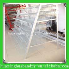 Équipement agricole de volaille pour cage de caille