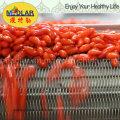 Bayas de Goji rojas orgánicas de Ningxia --100% de materia prima estupenda