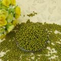 2012 nueva cosecha, pequeña haba de mung verde para los brotes, tipo MC