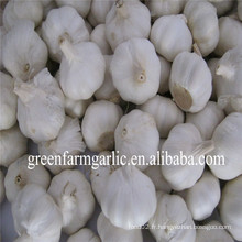 Ail blanc frais 4,5 cm et 5,0 cm