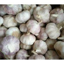 Top Qualität der neuen Ernte frischen weißen Knoblauch