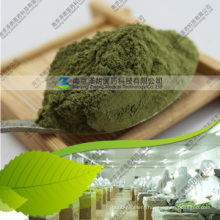 Hot Selling 80~200 Mesh Dehydrated Mulberry Leaf Powder