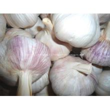 Высокое качество свежий нормальный белый чеснок