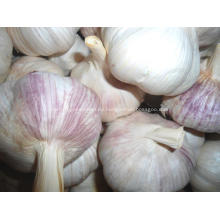Hochwertiger frischer normaler weißer Knoblauch