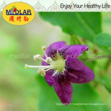 Aliments santé locaux Wolfberry rouge