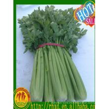 verduras frescas apio fresco