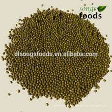 Different Types Dried Beans