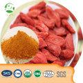 China Orgânica saudável Fornecimento de Fábrica Goji Berry Suco Em Pó, Goji Berry Em Pó De Alta Qualidade, extrato de wolfberry