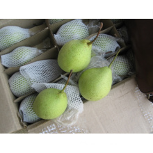 Fresh shandong pear wholesale/ China fresh Ya Pear for exporting