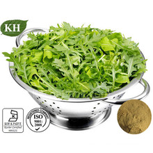 High Natural Anti-Bacteria 4: 1; 10: 1 Arugula Extract