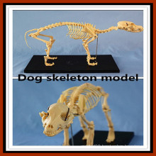 Animal Product Dog Skeleton Model for Sale