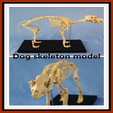 Modelo de esqueleto do cão do produto animal para a venda