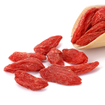 Ningxia Best Quality Goji bärplanter