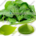 Natural Dehydrated 80 to 200 Mesh Spinach Powder