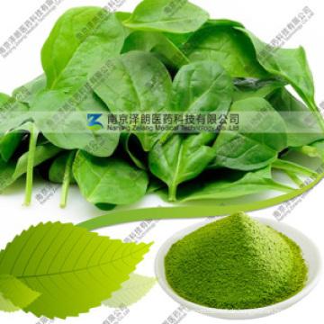Natürliches dehydriertes 80 bis 200 Mesh Spinat Powder