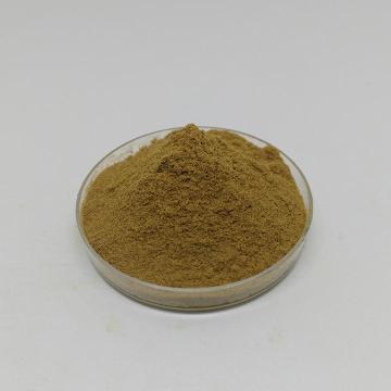 Ganoderma lucidum extract Ganoderma lucidum polysaccharides