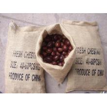 Professinal Exportieren Neue Ernte Gute Qualität Kastanie