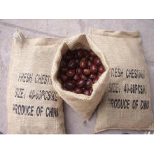 Professinal Exporting New Crop Good Quality Chestnut