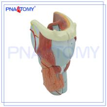 PNT-0440 Die Knorpel Kehlkopf Expansion Anatomie Modell Kunststoff Anatomie Modell