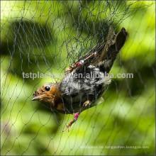 Vogelnetze zum Vogelfang