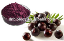 Manufacturer Acai Berry Extract 5%-70% Anthocyanin, flavone, polyphenol