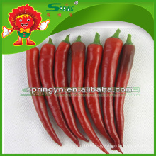 2015 organic GREEN RED Chilli Big Chilli