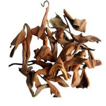 Top qualidade Pyrrosiae Folium shiwei pyrrosia folhas