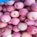 paper bagged qinguan apples