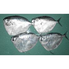 100-200g Gefrorene Vollrunde Moonfish
