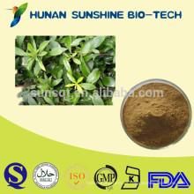 La mejor calidad Natural Senna Leaf extracto / extracto de Folium Sennae en polvo / Sennosides 8% -20%