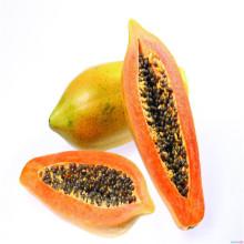 Temprano maduro vigoroso taiwan indio productivo tolerante a las semillas de semillas de papaya virus de punto de spot (1001)