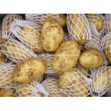 Patata fresca buena sabrosa de alta calidad