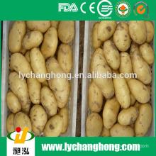 2014 hot sale fresh potatos exporter from China