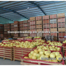2012 fresh pomelo