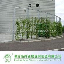 Decorativa planta verde escalada malla de pared