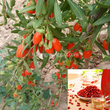 Baie de goji pour augmenter l'absorption du calcium