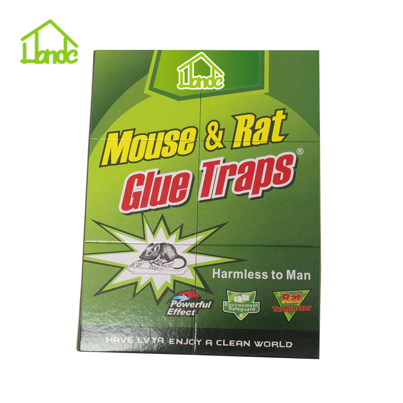 Sticky Paper For Rats