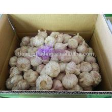 Paquets d'ail chinois en sac ou en carton