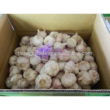 Pacotes chineses do alho no saco ou no cartão