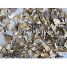 cogumelos-ostra secos