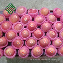 fournisseur de pomme fuji chinois usine de pomme fraîche