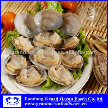 Frozen cooked baby clam in shell