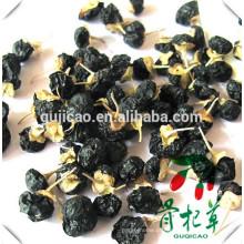 bagas pretas do goji / wolfberry preto / Lycium ruthenicum murr highland fruta doce