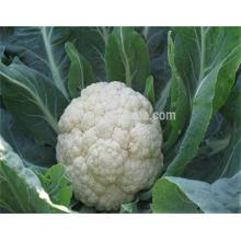 Venta caliente coliflor congelada vegetal con precio bajo