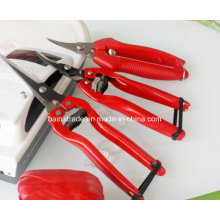 Garden Tools Garden Scissors for Export